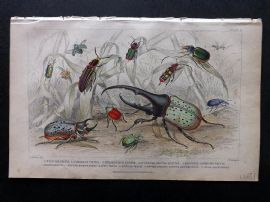 Goldsmith 1853 Antique Hand Col Print. Beetles. Insects